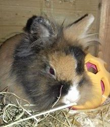Goed verzorgd konijntje