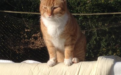 Muis is vermist!! Rode kater
